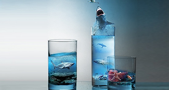 22 – Sharks