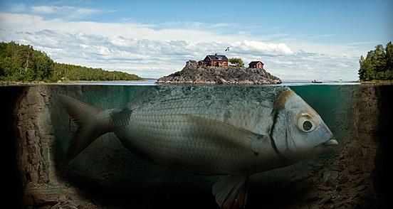24 – Fishy Island